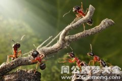 梦见身上爬了很多蚂蚁